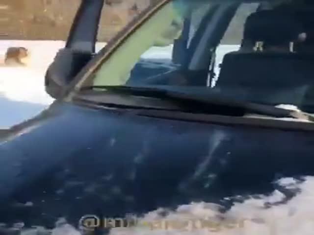 Мужчина решил прокатить «кисок» на своем внедорожнике