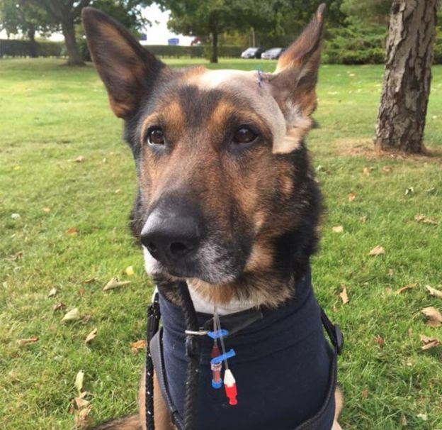 Бесстрашный полицейский пес (7 фото)