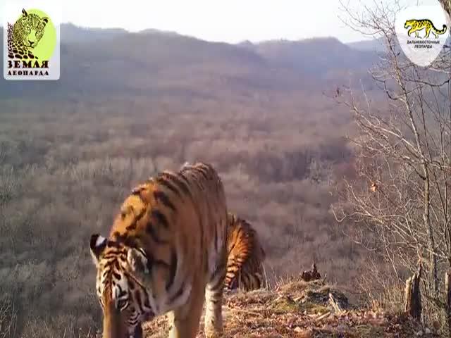 Семь видов животных сняли на камеру в национальном парке «Земля леопарда»