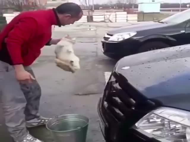 Водитель наказал кота и теперь его ищет полиция