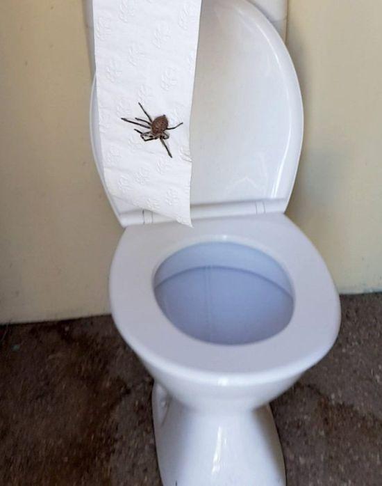 Австралийка сделала жуткую находку в своем туалете (3 фото + видео)