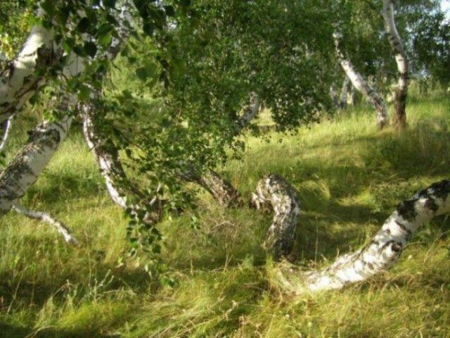 Загадочные места на территории России (8 фото)