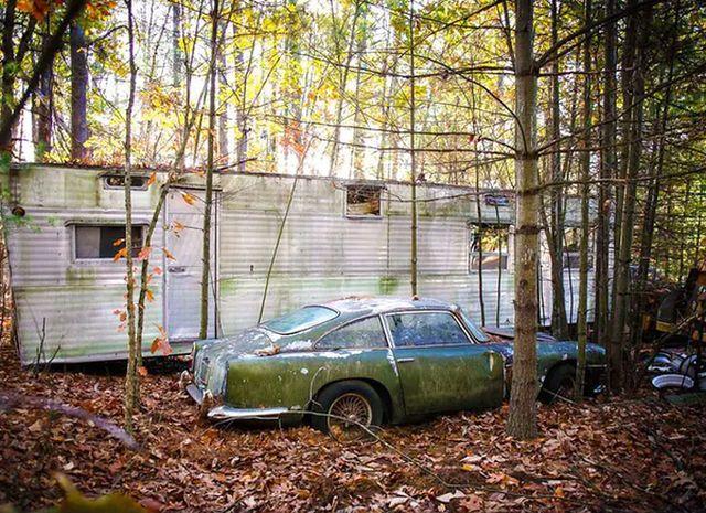 Находка в лесу ценной в 250 000 долларов (10 фото)