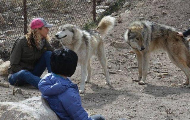 Находка щенка (7 фото)
