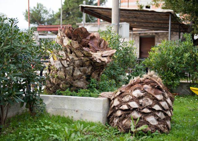 Маленький и проворный убийца деревьев (4 фото)