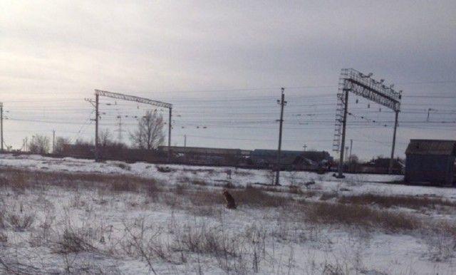Жители Волгограда спасли собаку от смерти  (3 фото)