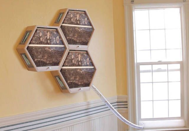 Бджоли замість домашніх улюбленців (фото)