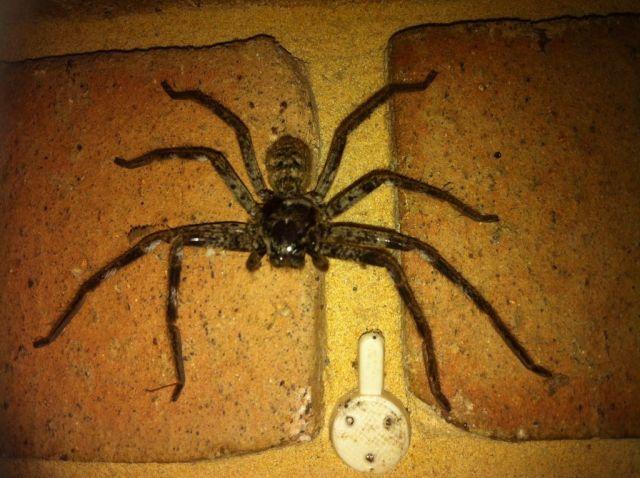 Дети предложили отцу покормить паучка (2 фото)