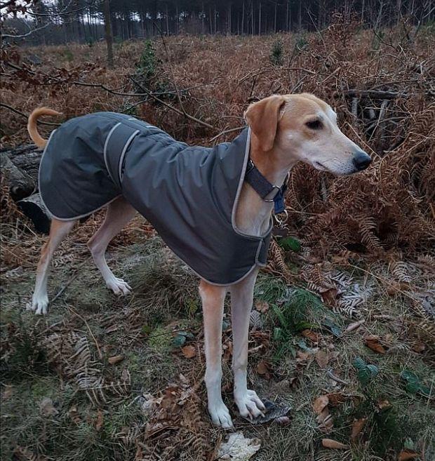 Спасенная собака набрала лишние килограммы (8 фото)