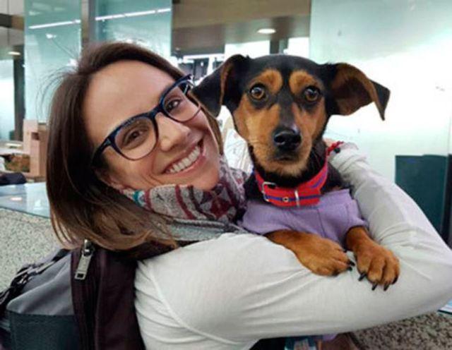 Меган Дюамель спасает корейских собак (4 фото)