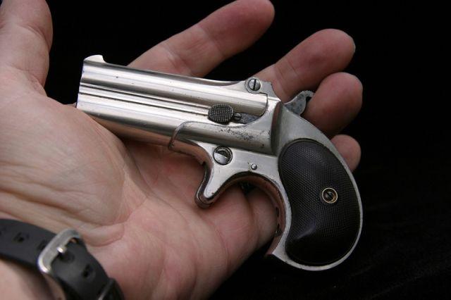 Миниатюрный техасский убийца (20 фото)