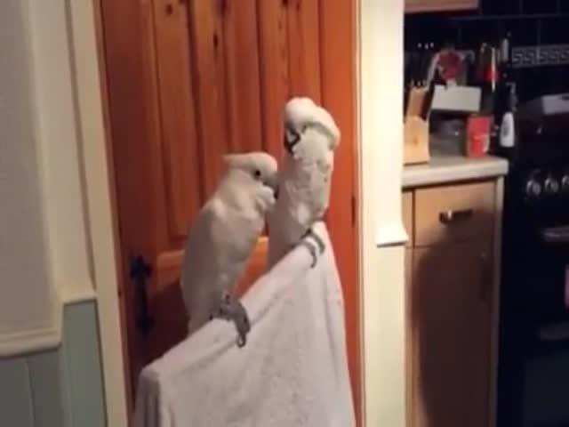 Попугай тоже не против потанцевать
