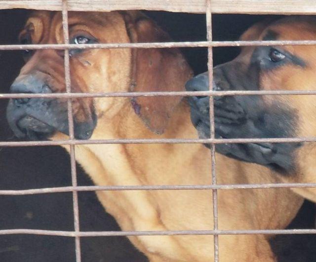 Без медали, но с собакой: приключения Гаса Кенуорти в Пхенчхане (6 фото)