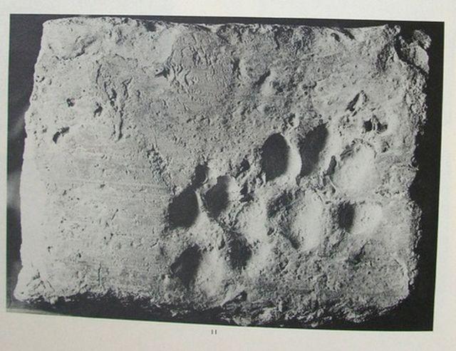 Кошачьи лапки стали следом истории (5 фото)