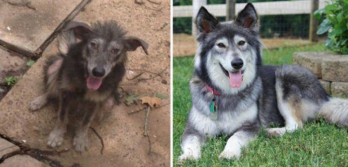 До и после (34 фото)