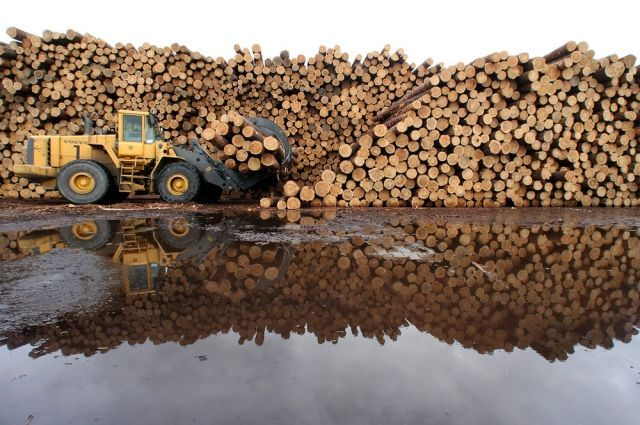 Китайская корпорация арендовала 137 га леса в Томской области (2 фото)
