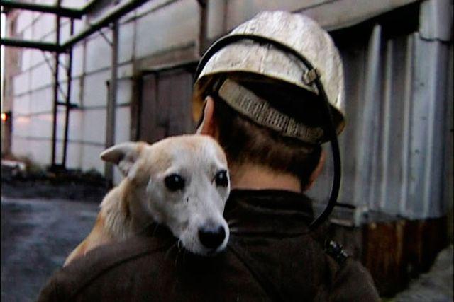 Памятник собаке-шахтеру (4 фото)