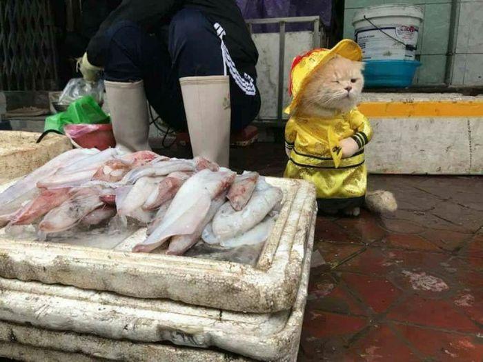 Мохнатый продавец рыбы (5 фото)
