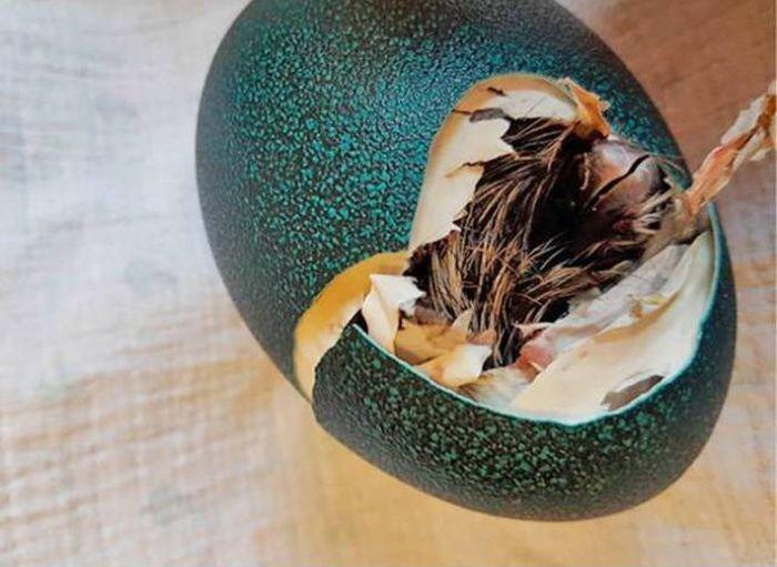 Покупала яйцо – получила страуса (3 фото)