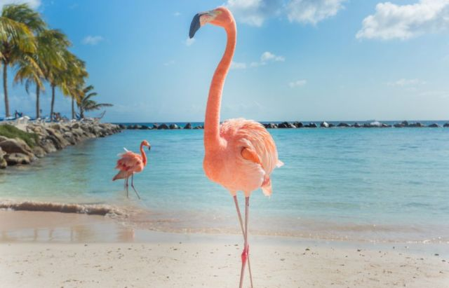 Розовый фламинго – мечта безработного (3 фото)