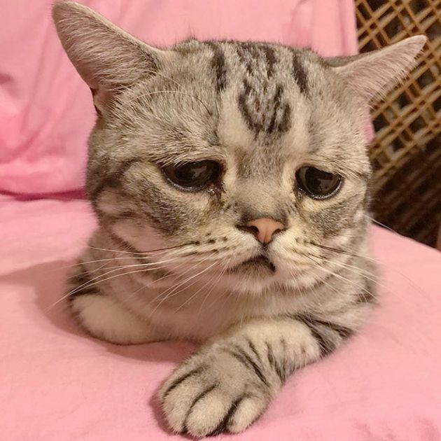 отвечали фото котенка расстроенного фрукты