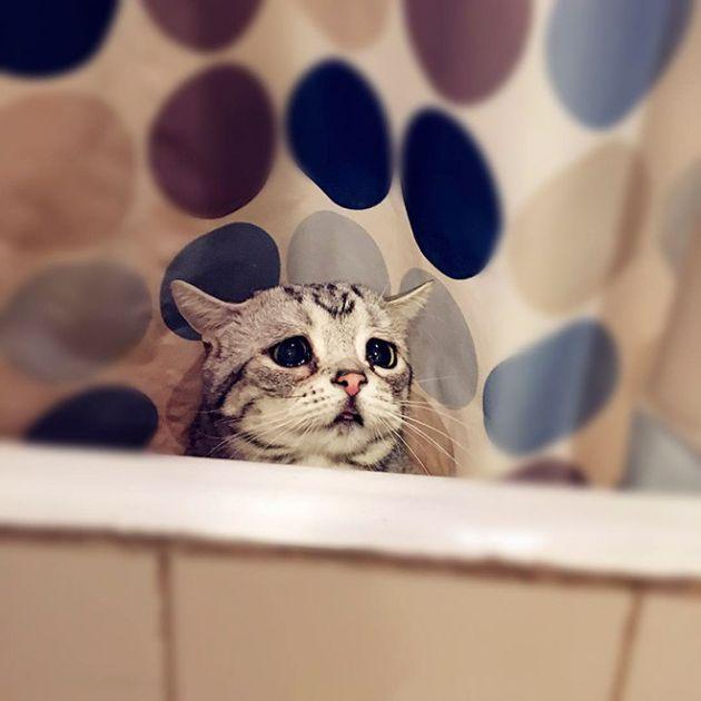 Самая грустная кошка в мире (25 фото)