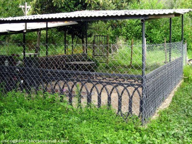 Кладбища на огородах абхазов (16 фото)