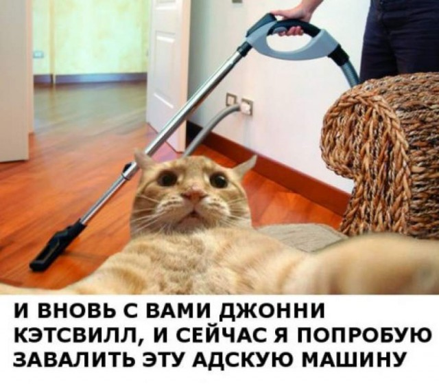 Самые известные мемы в истории Интернета (40 фото)