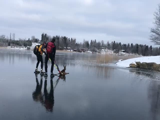 Спасение олененка на замерзшем водоеме
