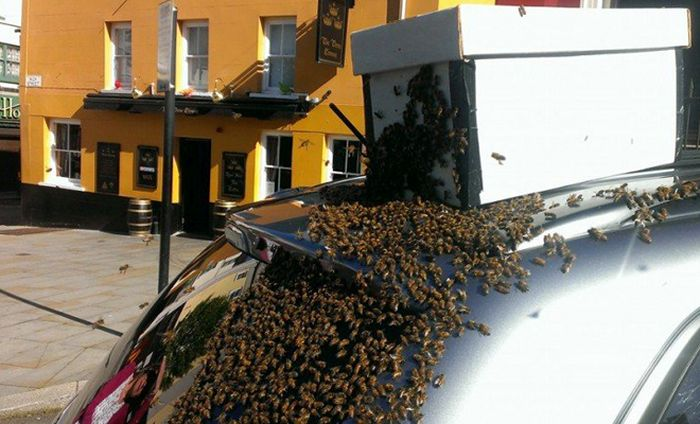 Рой пчел облюбовал автомобиль Mitsubishi (5 фото)