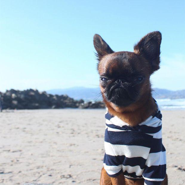 Недовольный пес может составить конкуренцию «Сердитому Коту» (12 фото)