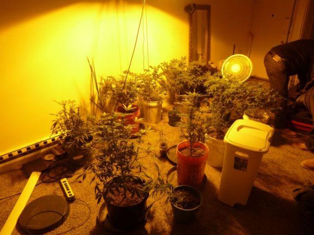 В доме американца обнаружили целый сад марихуаны (3 фото)
