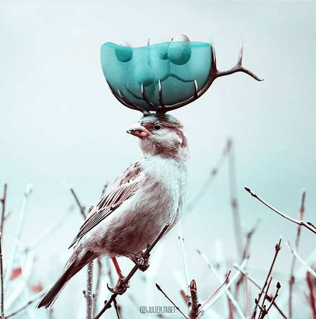 Виртуозный фотошоп от Жульена Табэ (17 фото)