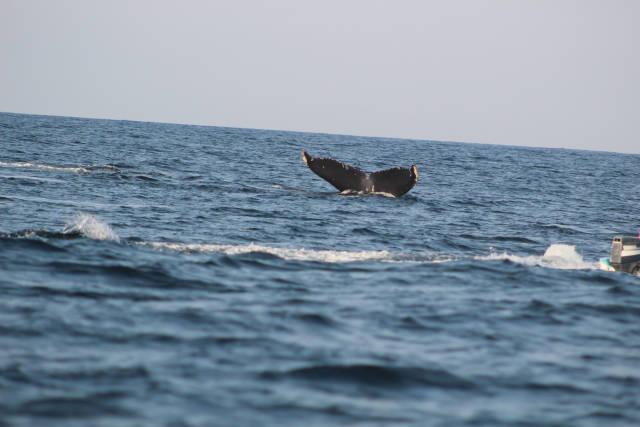 Возможные последствия наблюдения за китами (11 фото)