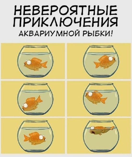 Подборка комиксов (20 картинок)