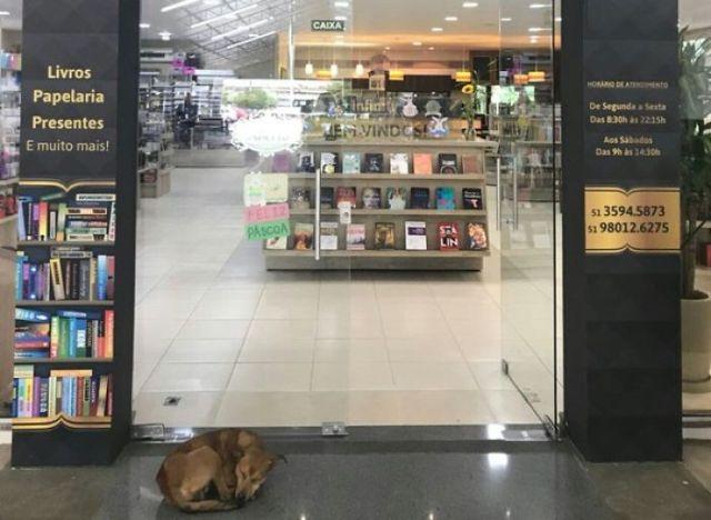 Бездомная собака украла книгу, что полностью изменило ее жизнь (7 фото)