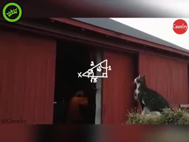 Этот прыжок должен был стать идеальным, но что-то пошло не так