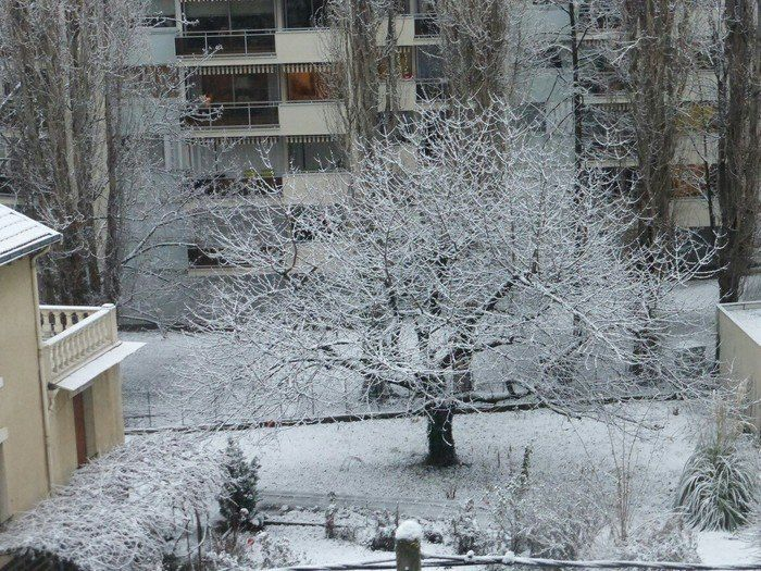 Грустная история дерева (4 фото)