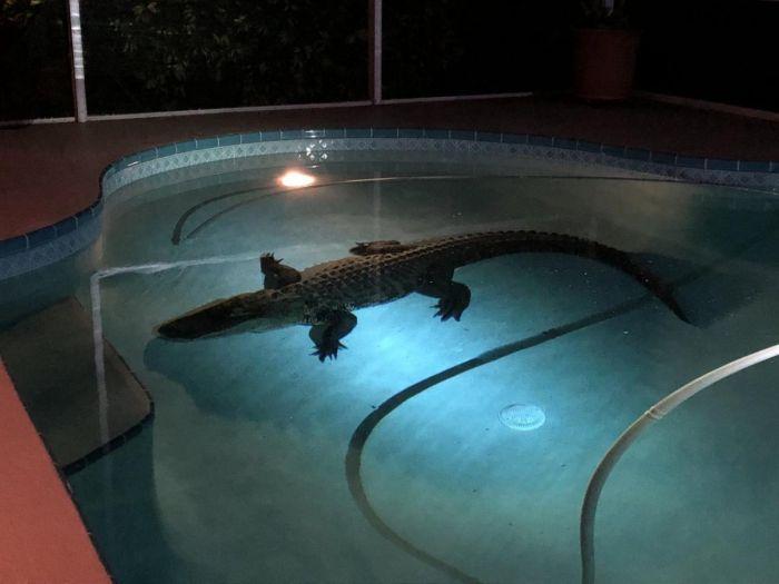 Опасная находка в собственном бассейне (5 фото)