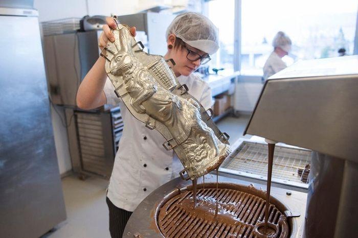 Как делают шоколадных зайцев (6 фото)