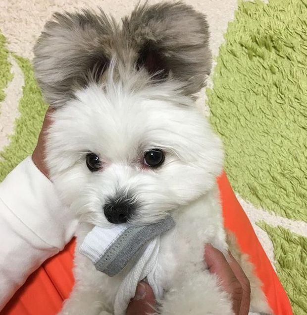 Пес обрел славу благодаря своим необычным ушам (9 фото)