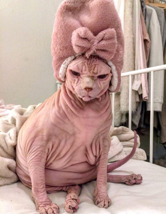 Угрюмый кот-сфинкс покоряет Instagram (3 фото)