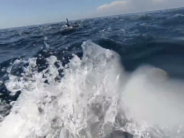 Парень плавает с огромной стаей дельфинов