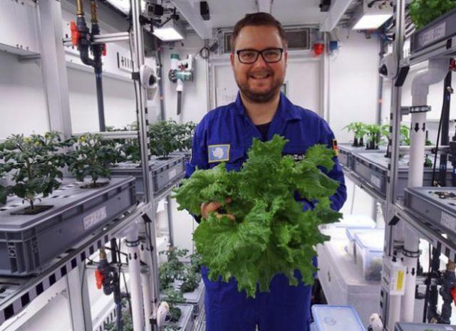 В Антарктиде собрали первый урожай овощей (4 фото)