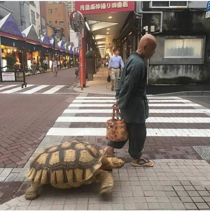 Смешные и странные фото из Азии (64 фото)