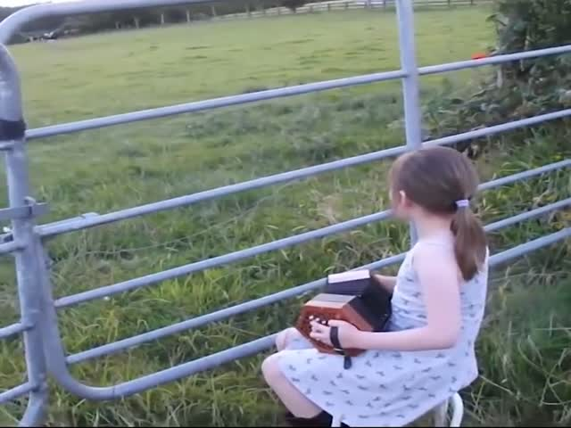 Коровы прибежали послушать музыку маленькой девочки