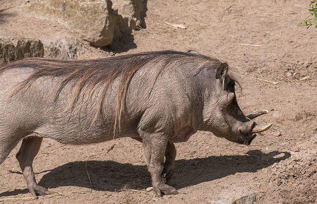 Не самые приятные животные (23 фото)