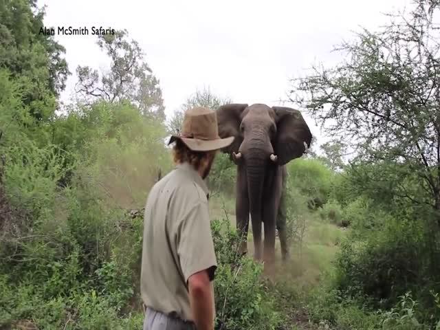 Как спокойно прогнать слона