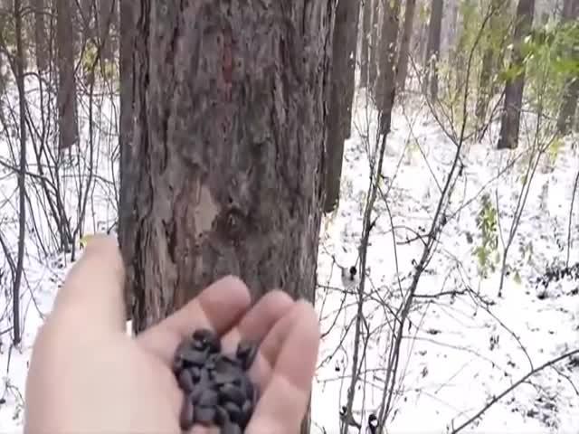 Парень пришел покормить лесных жителей