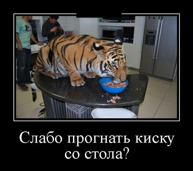 demotivatory_10.jpg